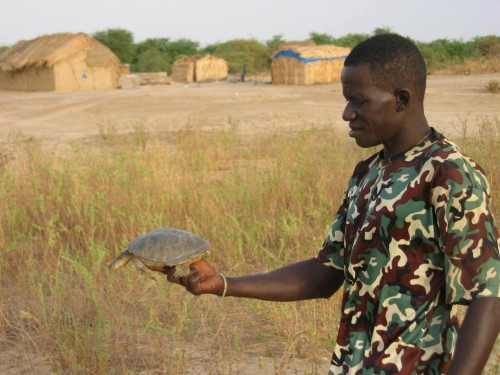 Makhmout, a local project partner, holding a large female Adanson's Terrapin