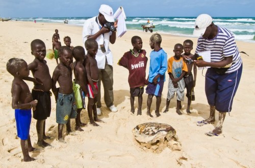 Outreach with kids around a dead Caretta caretta (Loggerhead Sea Turtle)