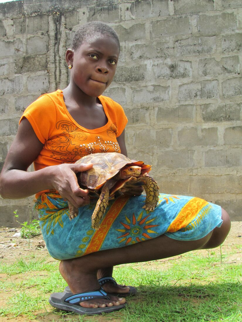 Girl Holding an adult male Kinixys erosa in Nigeria