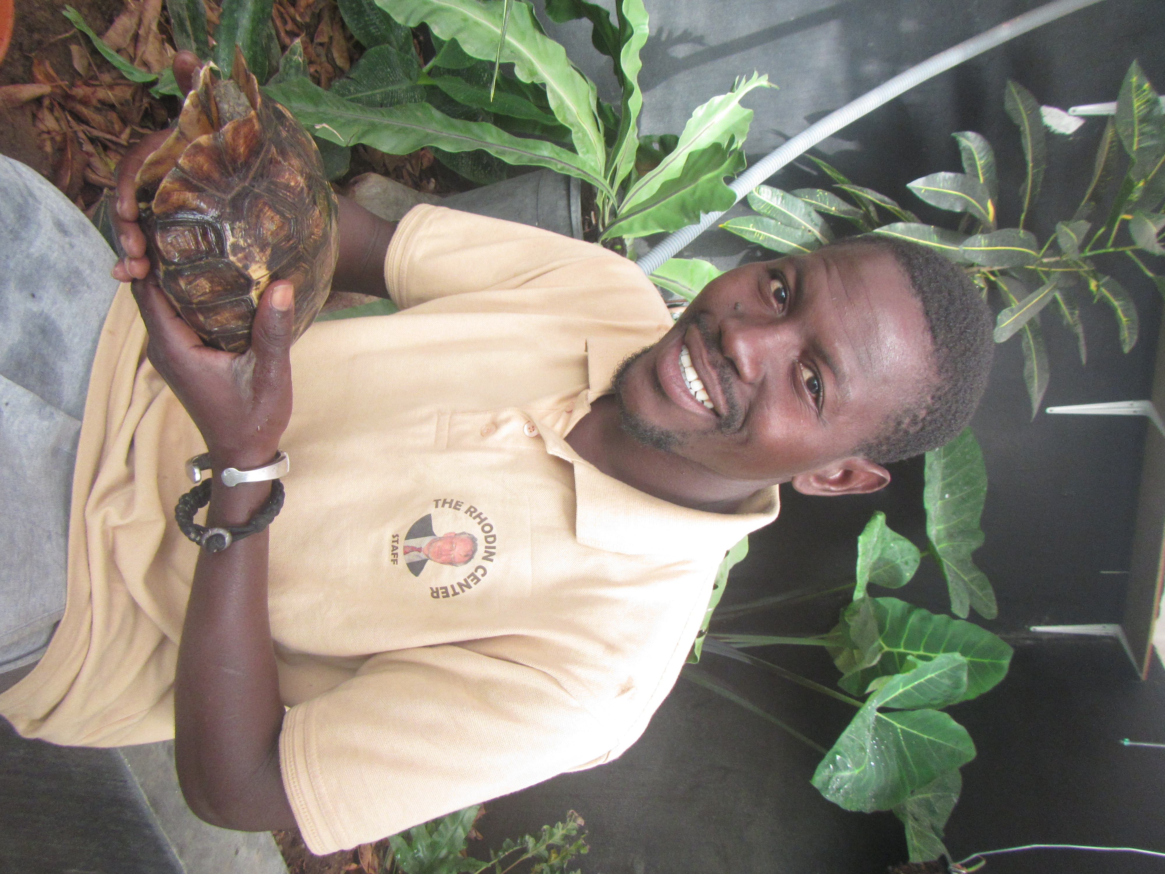 Marcel (Rhodin Center employee) holding a female of serrated hingeback tortoise at the Rhodin Center greenhouse
