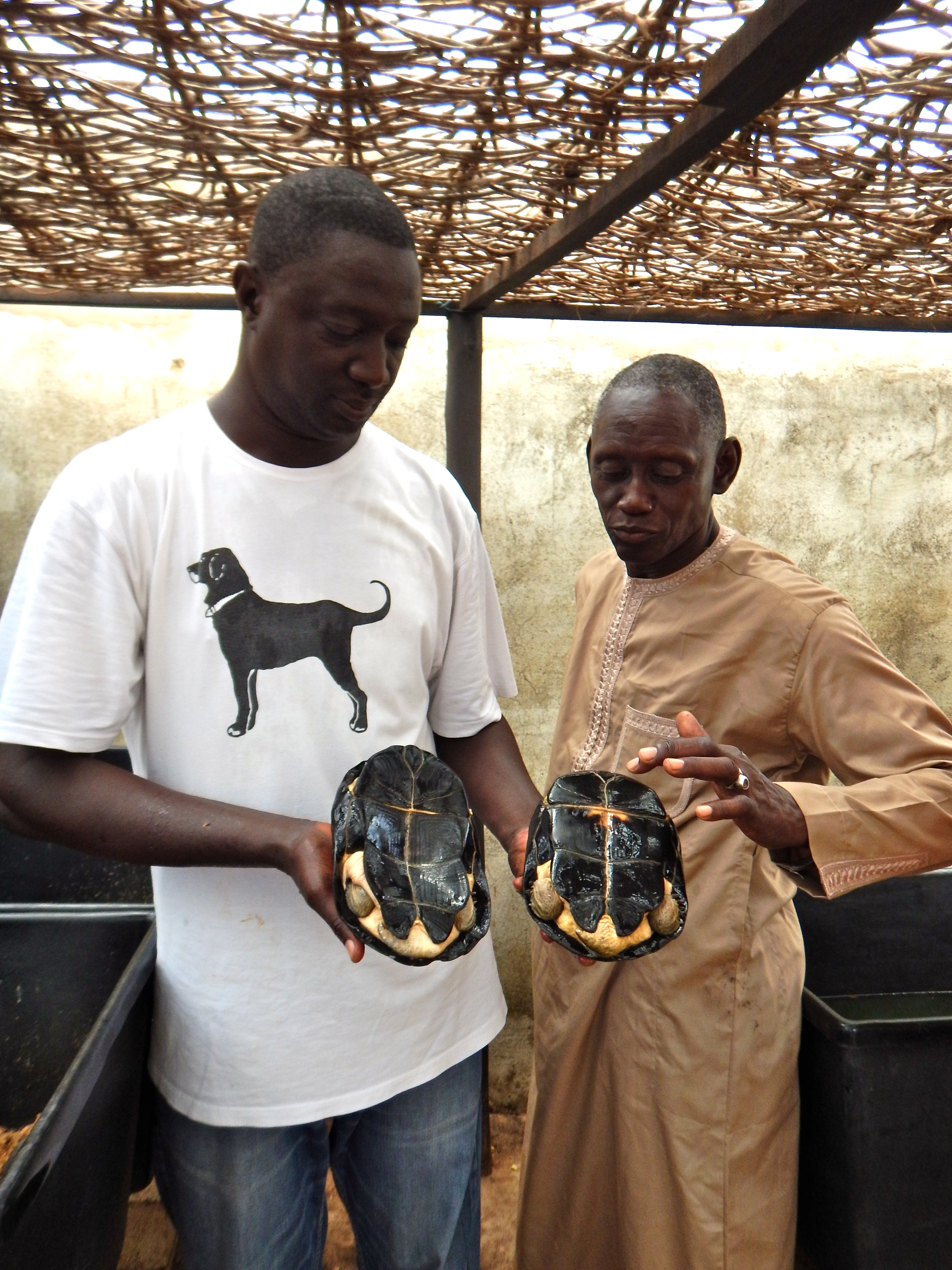 Tomas explaining African terrapin sexual dimorphism at the Rhodin Center Senegal