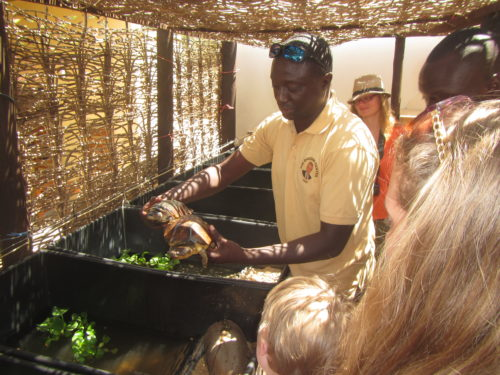 Tomas explaining Gabon terrapin, Pelusios gabonensis, ecology at the Rhodin center Senegal